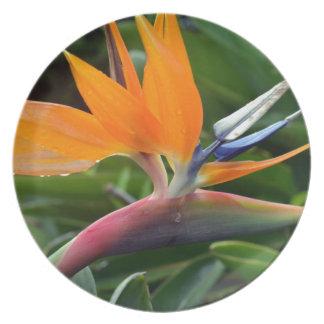 Bird Of Paradise Plate