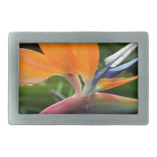 Bird Of Paradise Rectangular Belt Buckle