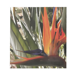 Bird of Paradise (Strelitzia) Notepad