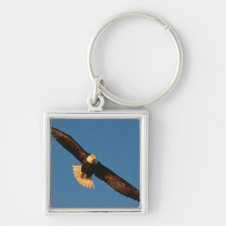 Bird of Prey, Bald Eagle in flight, Kachemak Keychain