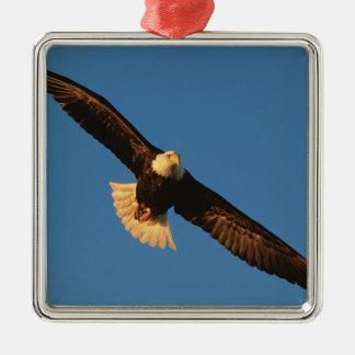 Bird of Prey, Bald Eagle in flight, Kachemak Silver-Colored Square Ornament