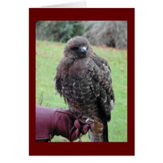 Bird of Prey Card