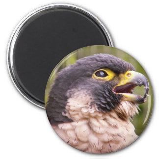 Bird of Prey Magnet