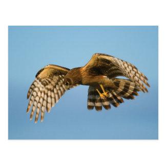 Bird of Prey Postcard