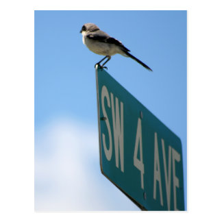 Bird on 4th Ave. postcard