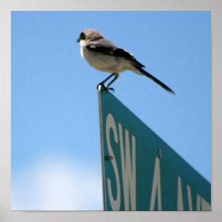 Bird on 4th Ave. print