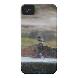 bird on a wall Case-Mate iPhone 4 cases
