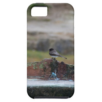 bird on a wall iPhone 5 cover