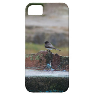 bird on a wall iPhone 5 covers