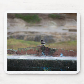 bird on a wall mouse pad