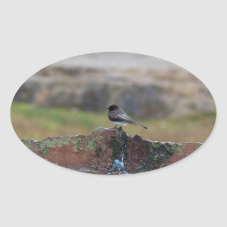 bird on a wall oval sticker