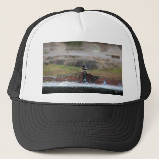 bird on a wall trucker hat