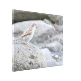 Bird on Rocks Canvas Print