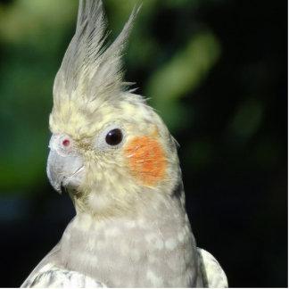 Bird Acrylic Cut Out