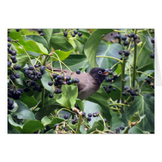 Bird snacking on a berry card