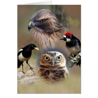 Bird Watcher Collage Cards
