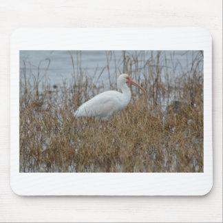 Bird White Ibis Nature Mouse Pad