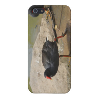 Birdie Cover For iPhone 5