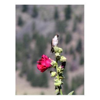 Birdie Perch Postcard