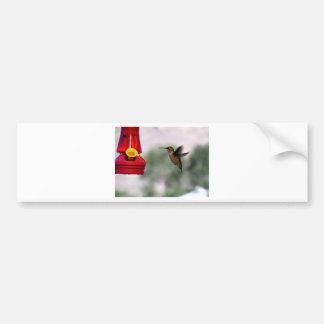 Birdie Yum-Yums Bumper Sticker