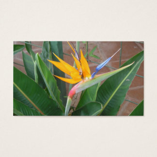 birdofparadise business cards
