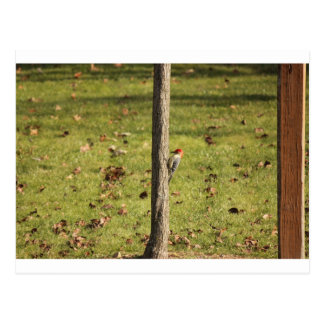 birds 132.JPG Postcard