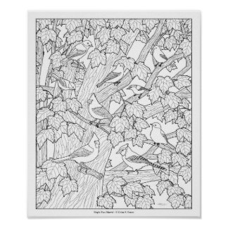 "Birds and Maple Tree Adult Coloring Page 12""x10"" Poster"