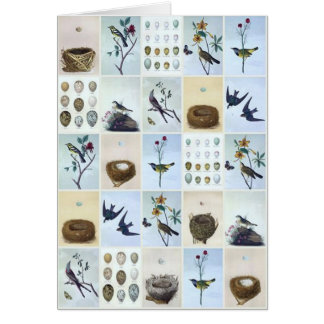 Birds and Nests Card