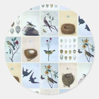 Birds and Nests Classic Round Sticker