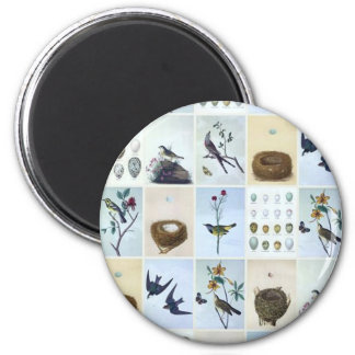Birds and Nests Magnet
