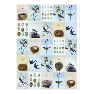 Birds and Nests Postcard