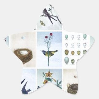 Birds and Nests Star Sticker
