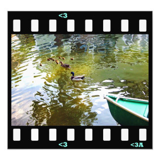 birds- duck family photo art