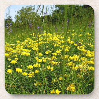 Birds-foot Trefoil Hard Plastic Coasters
