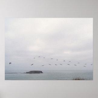 Birds in flight poster