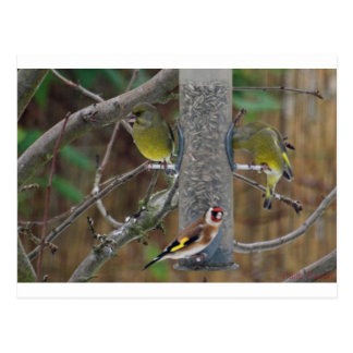 Birds in my Garden Postcard