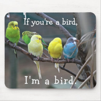 Birds Love Quote Parakeets Budgies Photo Mouse Pad