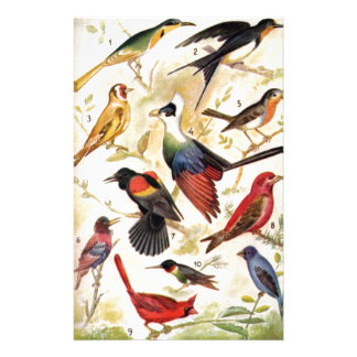 Birds of be colors to you - Stack of papers