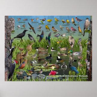 Birds of Freshwater Wetlands Poster