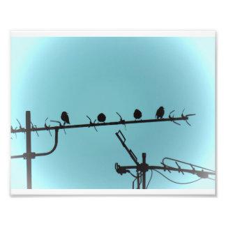birds of istanbul photo 2017