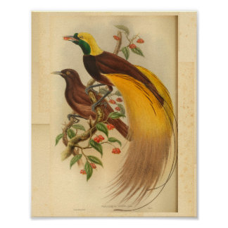 Birds of Paradise Green Yellow Vintage Print