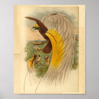 Birds of Paradise Green Yellow Vintage Print
