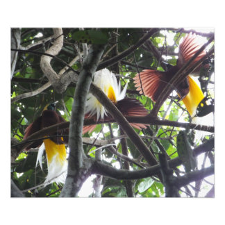 Birds of Paradise Photographic Print