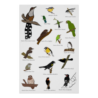 Birds of Puerto Rico Poster