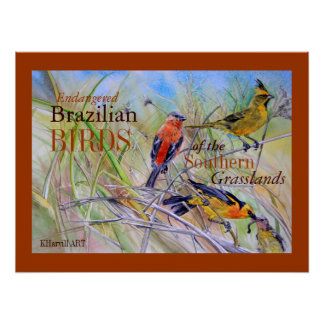 Birds of the Brazilian Grasslands Fine Art Poster