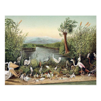 Birds of the Caucasus Postcard
