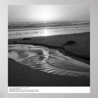 Birds on a Beach, Santa Barbara, 1966 Poster