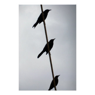 Birds on a wire birds in a row poster photograph