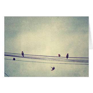 Birds on a wire - blank inside card