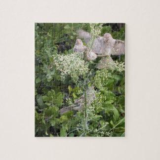 Birds & Plants Jigsaw Puzzle